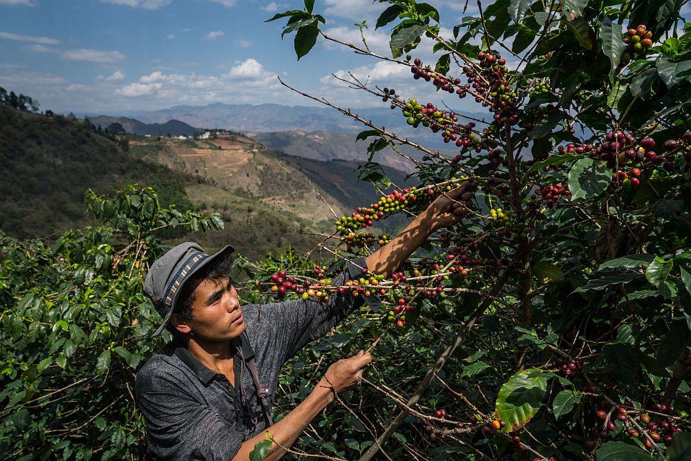 Bei seinen Shopping-Aktionen unterstützt die chinesische Plattform auch Kaffeebauern und andere kleine Farmbetriebe. (Foto: Pinduoduo)